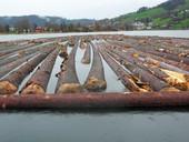 Zum Flössen zusammengetragenes Holz